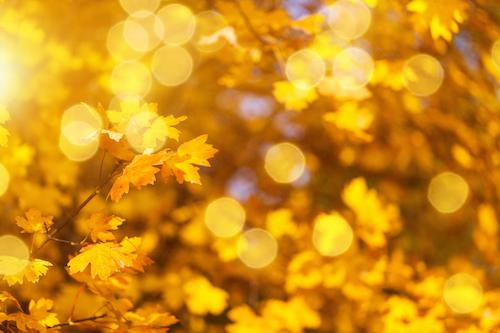 Herbstbummel Kalender